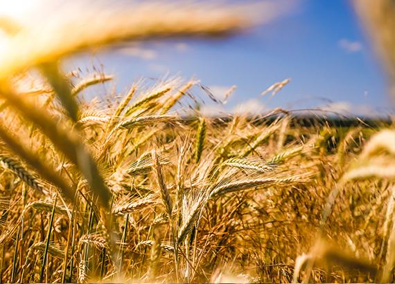 Promoting farm foods